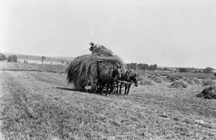 """Drawing Hay at McKellar Farm"" photo from the Topley Collection at the National Archives (PA-009866). This photo would date from the 1890s, and shows the Ottawa River in the background top left, the Thomson farm and Maplelawn top right, and the cluster of trees lining Richmond Road."