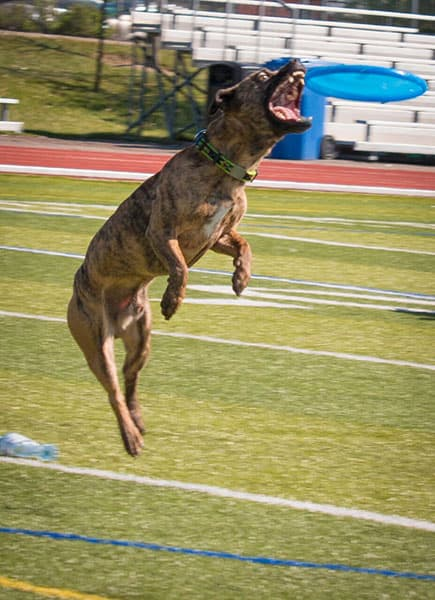 PC Superdogs: Saturday, June 11 and Sunday, June 12 | 11:30/1:30/3:30
