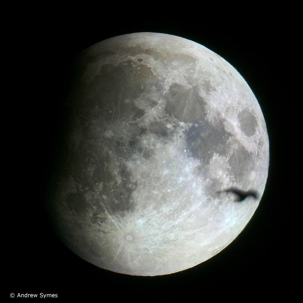 Lunar Eclipse & Bird, September 27, 2015